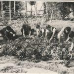 Sociedad de Instrucción Primaria, huerto escolar 1960